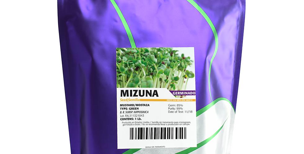 Germinado de Mizuna