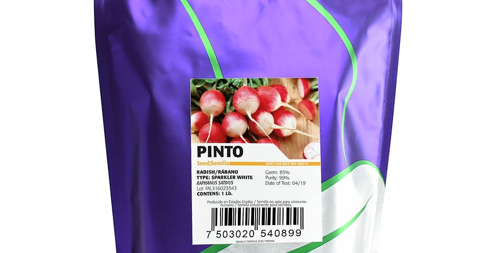 Rábano Pinto