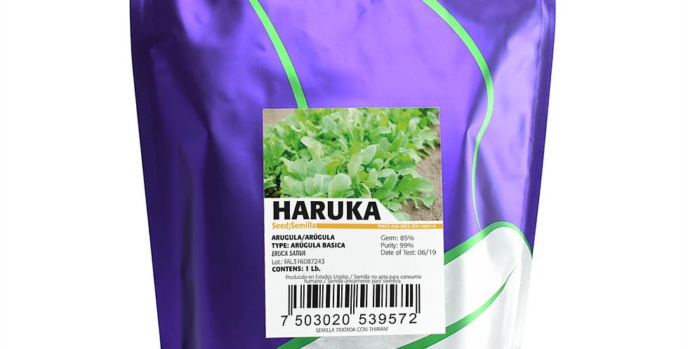 Arúgula Haruka