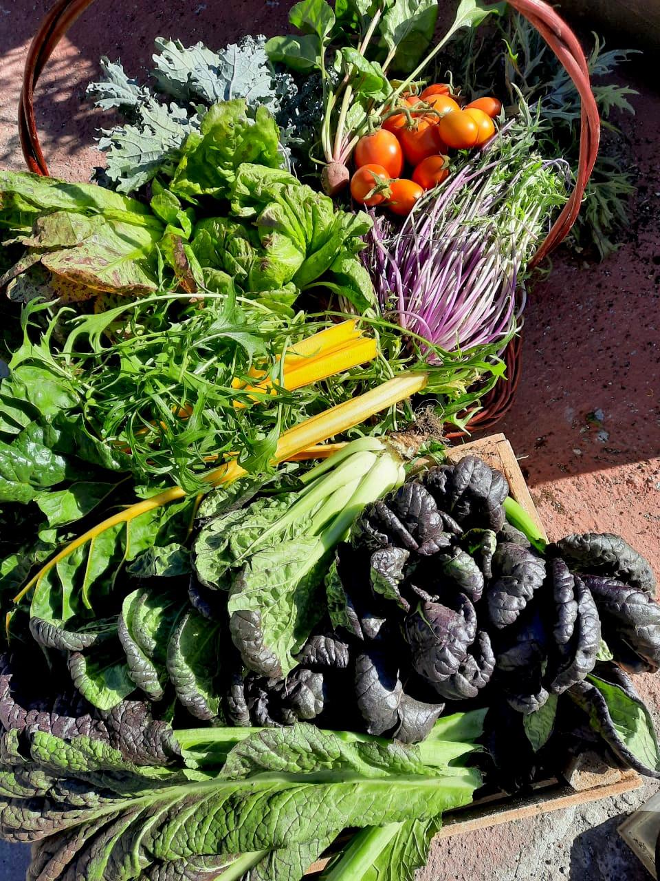 Producción de hortalizas de polinización libre