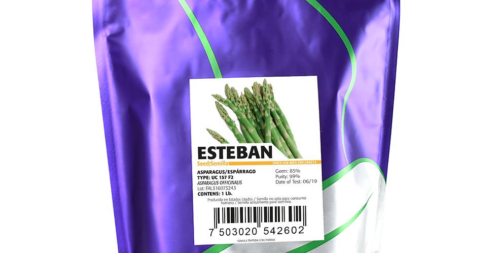 Espárrago Esteban