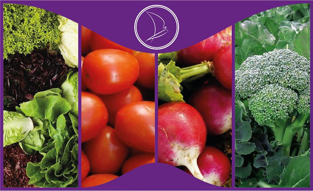 En este blog conocerás las principales diferencias que existen entre hortalizas y verduras, ya que seguramente has dudado más de una ocasión en que clasificación colocar tus alimentos.
