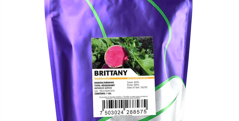 Rábano Brittany