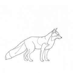 Fuchs_1