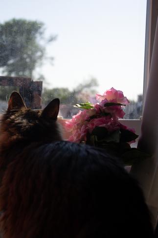 Smokey at the Window