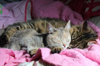 Siblings Napping