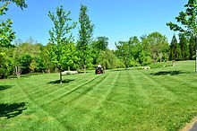 lawn-care-643557_960_720.jpg