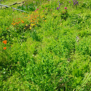4-14-21 Weeds, Computer Shopping, Home Ergonomics