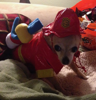 Dolce the Fire Dog