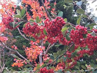 Cynthia Brian's Garden Guide for November-Color Me Happy!