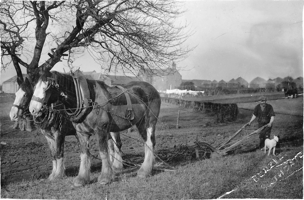 Ploughing at Newyearfield Farm, 1928