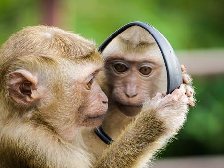A Strange Mirror
