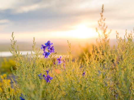 Small Seeds of Hope: Breathe in Beauty