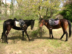 chevaux cappadoce
