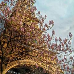 PA0904-2-019L00000 Tour Eiffel_DxO.jpg