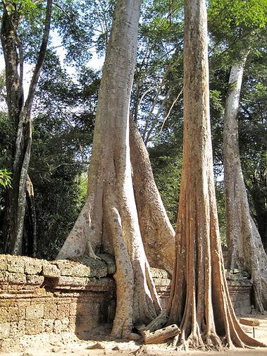 CA0901-2-201L00000 Temples d'Angkor (TA
