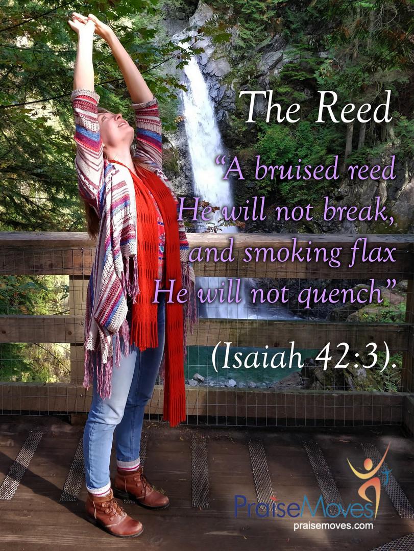the reed praise moves.jpg