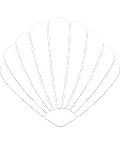 Clam Vector PNG.png