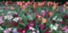 dbf52ab1-c068-4eec-ba82-7e0ee88de9f3_edited_edited.jpg
