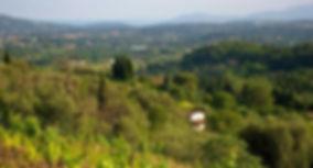 Pays de Grasse.jpg