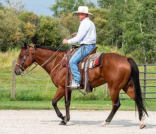 9 year old ranch gelding Doc Tom Tucker