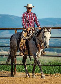 Solid, well broke, ranch gelding