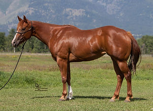 Double registered AQHA APHA big hip, youth horse