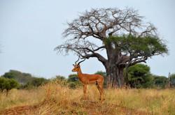 Beyond Adventures Safari photo.