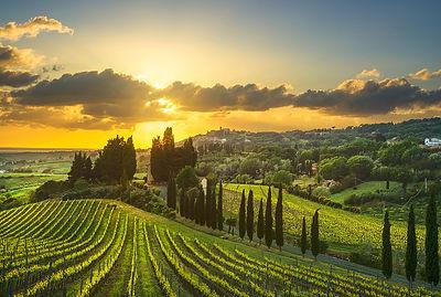 Vineyards in Alta Maremma at Sunset