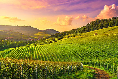 Barolo Vineyards at Sunset