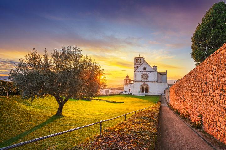 Olive Tree and San Francesco Basilica