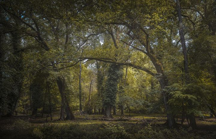 Mediterranean Forest in San Rossore