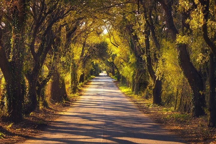 Bolgherese Road
