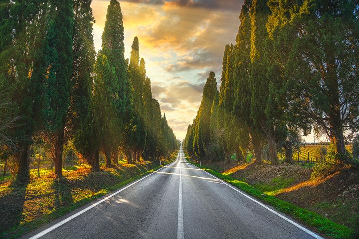 Bolgheri Boulevard and Sunbeams