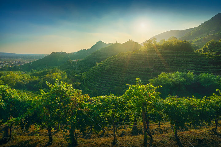 Prosecco Vineyards and Setting Sun