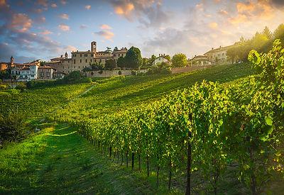 Neive Vineyards Sunrise