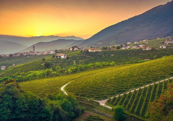 Vineyards after Sunset in Prosecco Hills