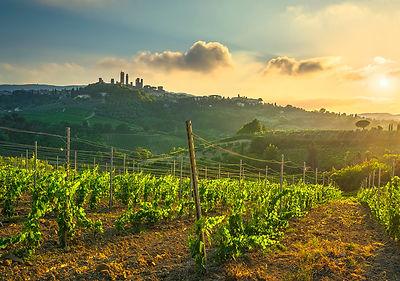 San Gimignano Vernaccia wine vineyards