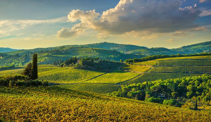 Panzano in Chianti Vineyards at Sunset