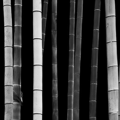 Bamboo, Study I (2010)