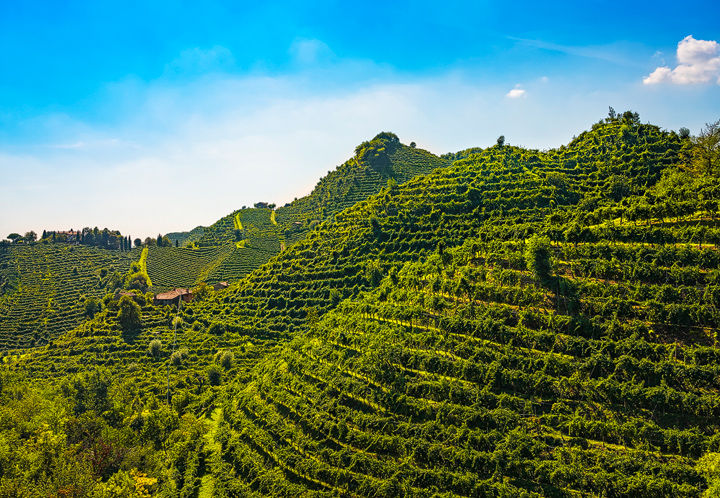 The Steep Hills of Prosecco
