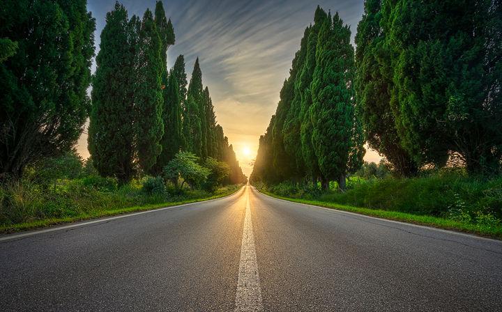 Bolgheri Boulevard and the Sun