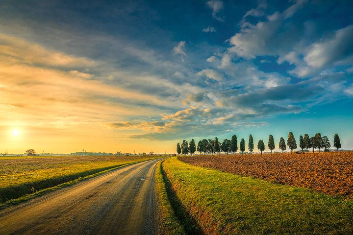 Rural Road and Cypresses