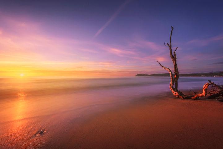 Baratti beach and old tree trunk