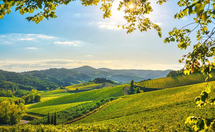 Afternoon in Radda Vineyards