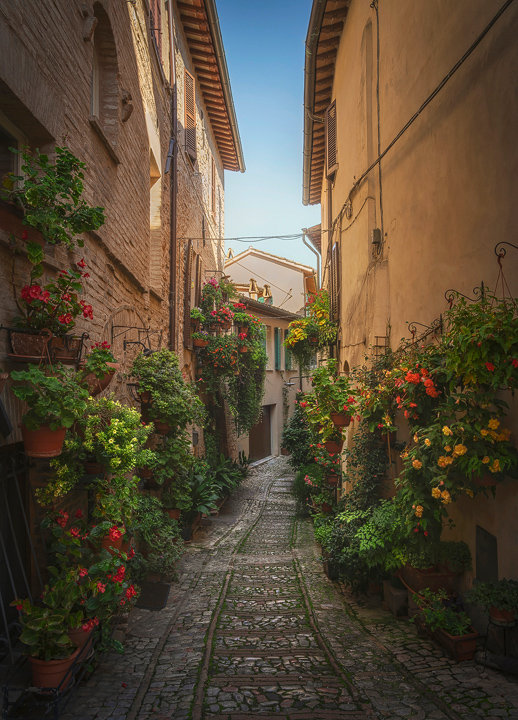 Plants and Flowers in Spello street