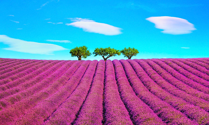 Lavender, Clouds and Trees
