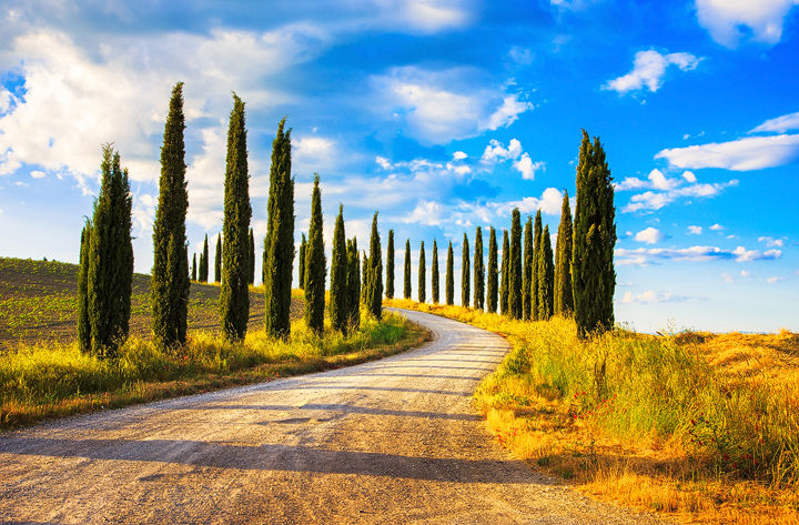 Country Road and Cypress Trees