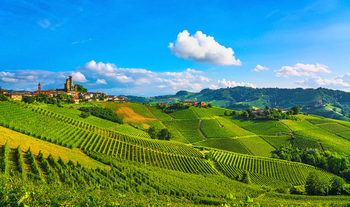 Serralunga d'Alba Vineyards