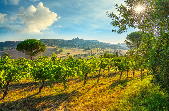 Casale Marittimo village and vineyards